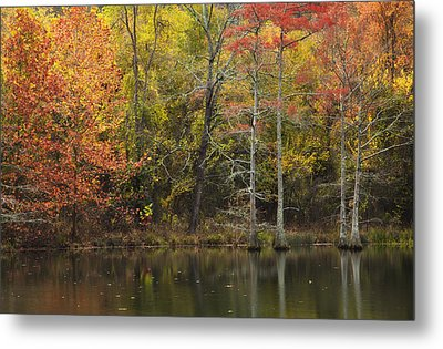 Morning Light In The Forest Metal Print by Iris Greenwell