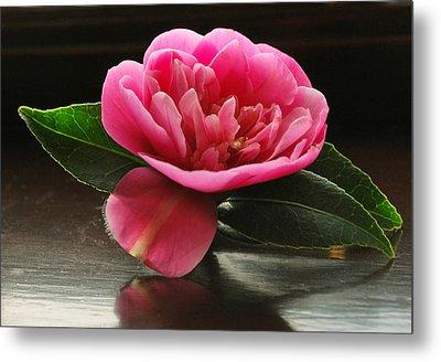 Pink Camellia Metal Print by Terence Davis
