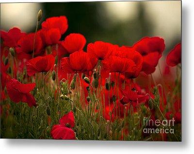 Poppy Flowers 05 Metal Print by Nailia Schwarz