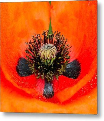 Poppy Heart Metal Print by Karon Melillo DeVega