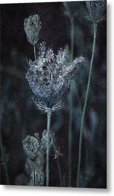Queen Anne's Lace Metal Print by Bonnie Bruno