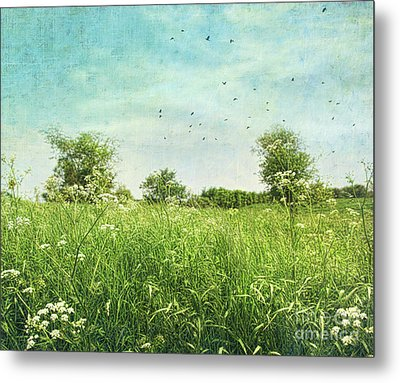 Queen Anne's Lace Wildflowers Metal Print by Sandra Cunningham