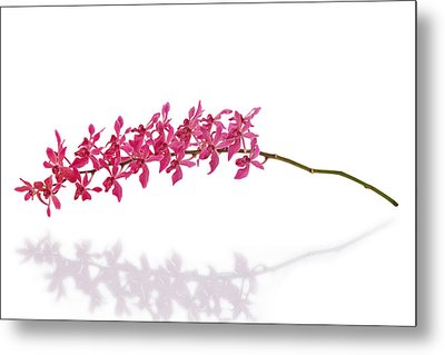 Red Orchid Metal Print by Atiketta Sangasaeng