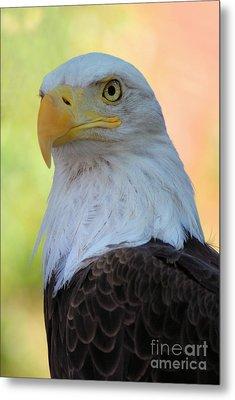 Regal Eagle Metal Print by Linda Eshom