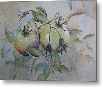 Ripening On The Vine Metal Print by Ramona Kraemer-Dobson