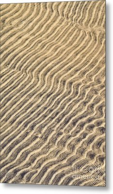 Sand Ripples In Shallow Water Metal Print by Elena Elisseeva