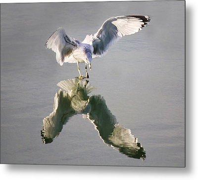 Sea Gull Reflection Metal Print by Paulette Thomas