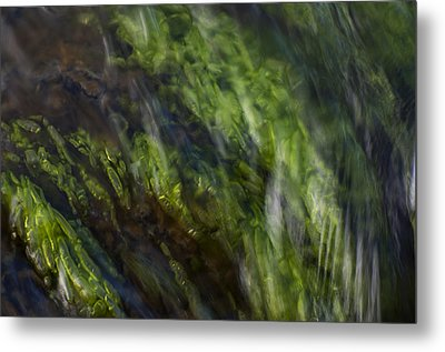 Sea Weed Metal Print by Michael Mogensen