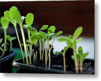 Seeding Shoots Metal Print by Sami Sarkis