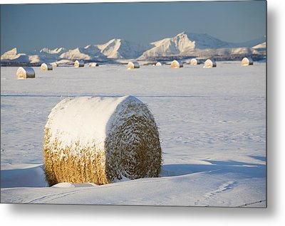 Snow-covered Hay Bales Okotoks Metal Print by Michael Interisano