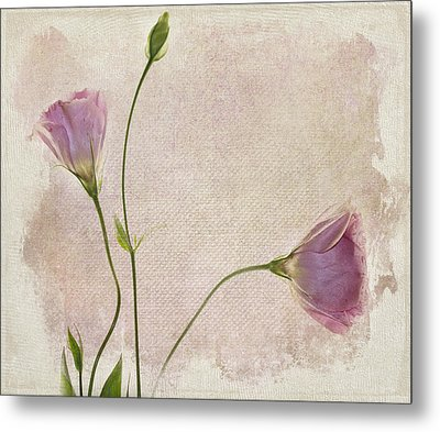 Softly Metal Print by Rebecca Cozart