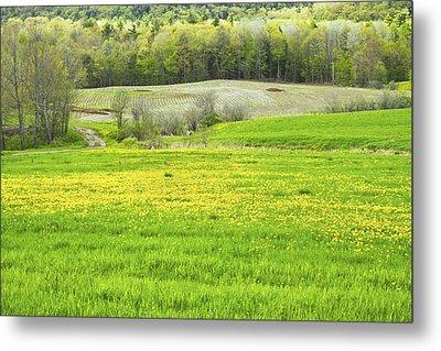 Spring Farm Landscape With Dandelion Bloom In Maine Metal Print by Keith Webber Jr