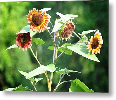 Sunflower Power Metal Print by Bill Cannon