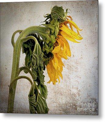 Textured Sunflower Metal Print by Bernard Jaubert