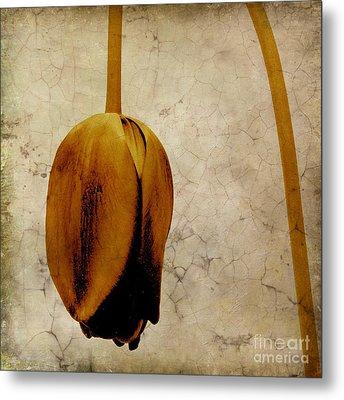 Textured Tulip Metal Print by Bernard Jaubert