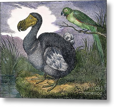 The Mauritius Dodo Metal Print by Granger