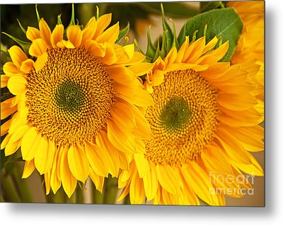 Twins Metal Print by Bob and Nancy Kendrick