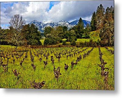 Vineyards And Mt St. Helena Metal Print by Garry Gay