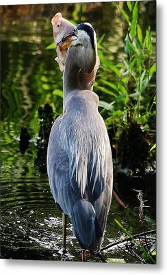 What A Catch Metal Print by Paulette Thomas
