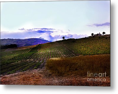Wine Vineyard In Sicily Metal Print by Madeline Ellis