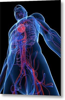 Cardiovascular System, Artwork Metal Print by Sciepro