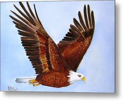 1149b  Bold Eagle 3 Metal Print by Wilma Manhardt