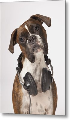 Boxer Dog With Headphones Metal Print by LJM Photo