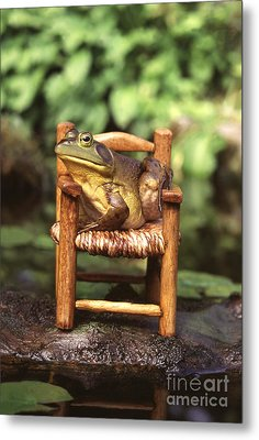 Bullfrog Metal Print by Kenneth H Thomas and Photo Researchers