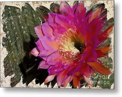 Cactus Flower  Metal Print by Jim and Emily Bush
