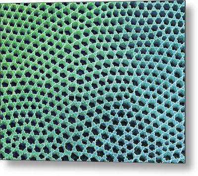 Diatom Cell Wall, Sem Metal Print by Steve Gschmeissner
