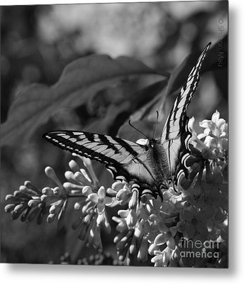 Expectation Of The Dawn Metal Print by Sharon Mau