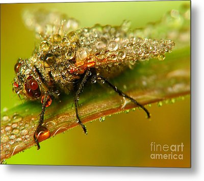 Fly Metal Print by Odon Czintos