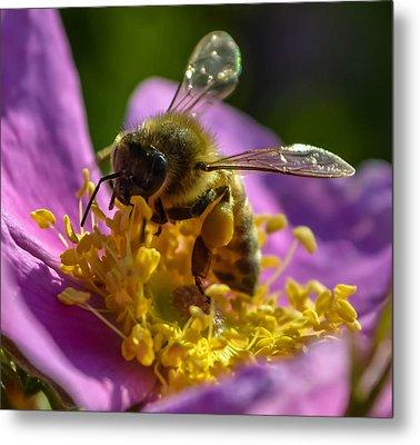 Honey Bee Metal Print by Brian Stevens