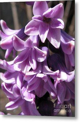 Hyacinth Named Splendid Cornelia Metal Print by J McCombie