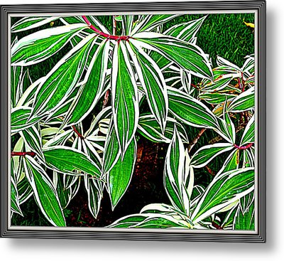 Leaves Metal Print by Anand Swaroop Manchiraju