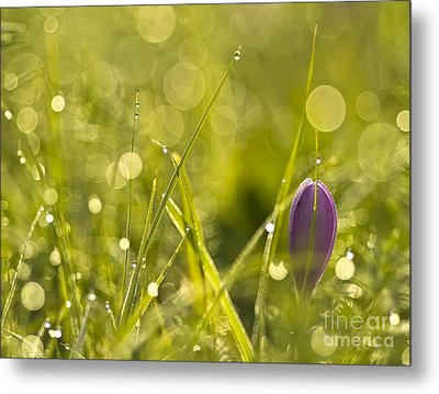 Light Flowers Metal Print by Odon Czintos
