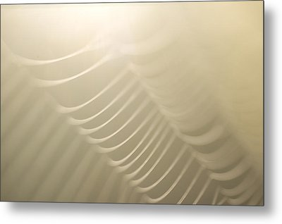 Part Of A Spider Web Shows Metal Print by Phil Schermeister