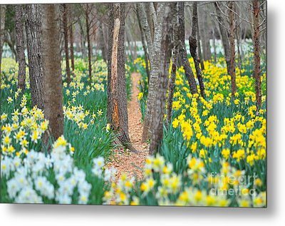Secret Places Metal Print by Catherine Reusch  Daley