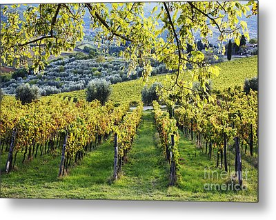 Vineyards And Olive Groves Metal Print by Jeremy Woodhouse