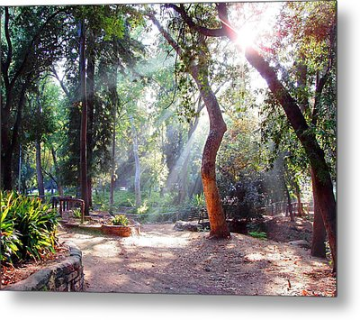Walk In The Park Metal Print by Randy Sprout