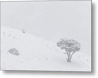 Yellowstone Park Wyoming Winter Snow Metal Print by Mark Duffy