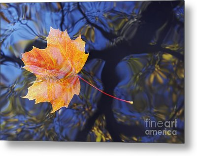 Autumn Leaf On The Water Metal Print by Michal Boubin