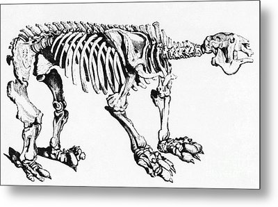 Megatherium, Extinct Ground Sloth Metal Print by Science Source