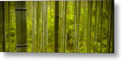 Mystical Bamboo Metal Print by Sebastian Musial