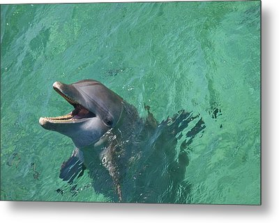 Roatan, Bay Islands, Honduras Metal Print by Stuart Westmorland