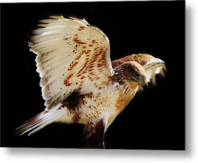 Wings Metal Print by Paulette Thomas