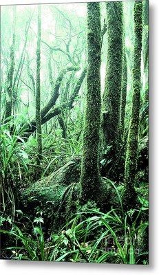 El Yunque National Forest Metal Print by Thomas R Fletcher