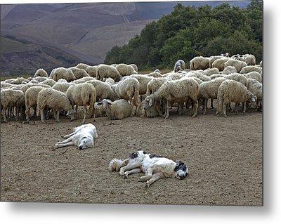 Flock Of Sheep Metal Print by Joana Kruse