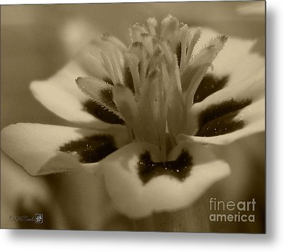French Marigold Named Starfire Metal Print by J McCombie