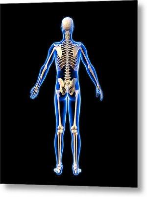 Male Skeleton, Artwork Metal Print by Roger Harris